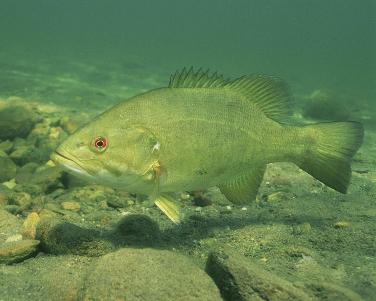 The Best Solution For Fall Bass Fishing In Difficult Weather