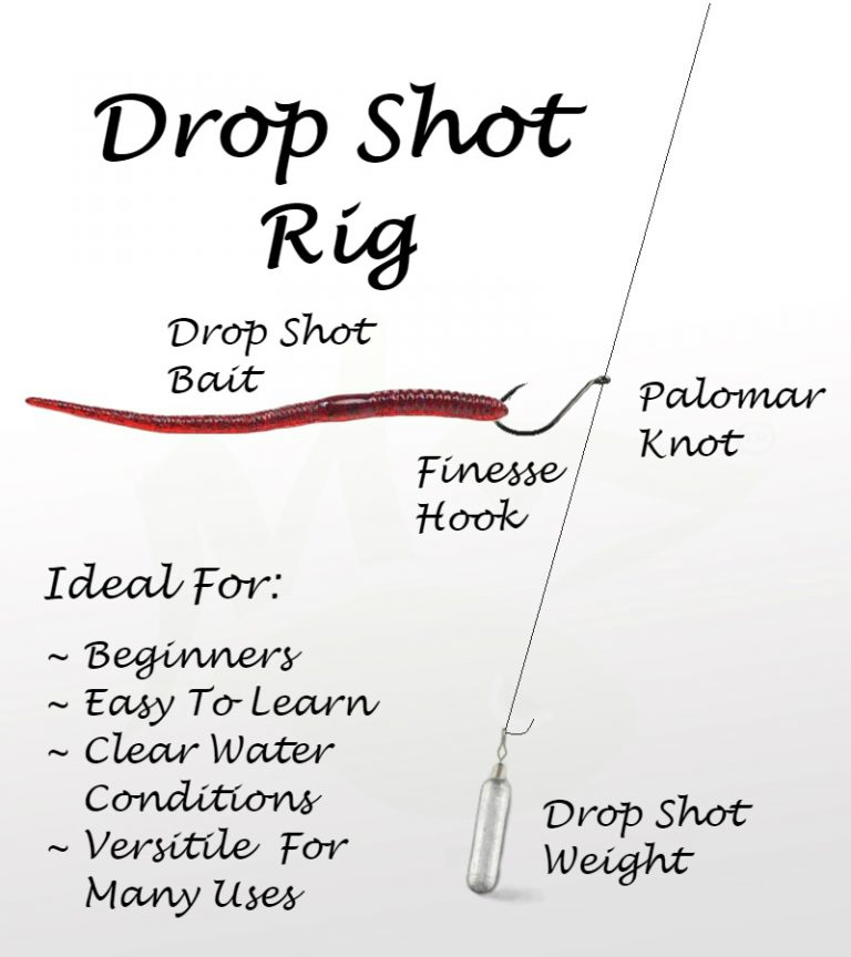 drop shot rig diagram basics beginner